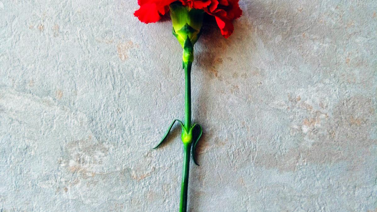 Najbardziej niezwykły sposób w jaki dostałam kwiaty – czyli jak wykreować absolutnie wszystko, czego pragniesz
